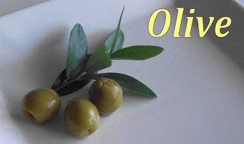 olive-seed.jpg